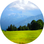 Decorative image of a field with evergreen trees, mountains, sky and clouds in the background.